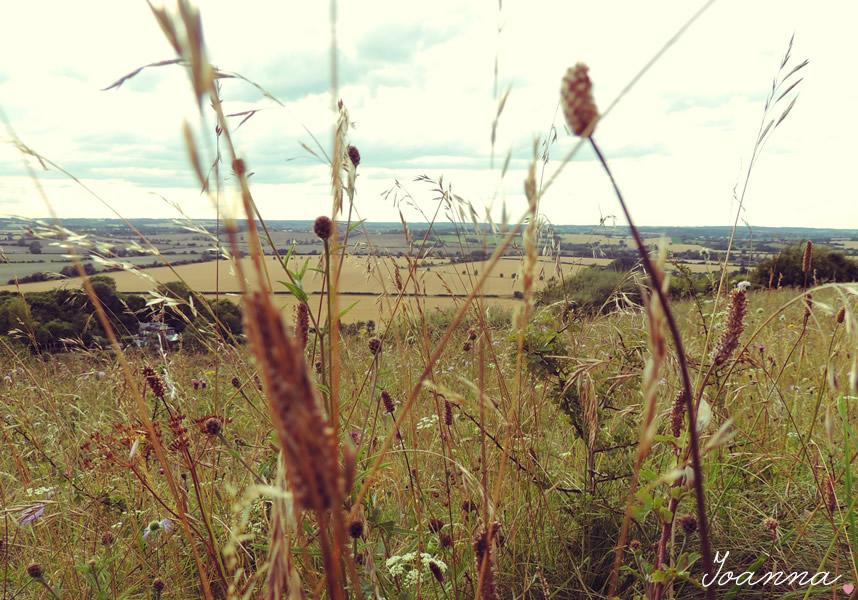countryside_photograph