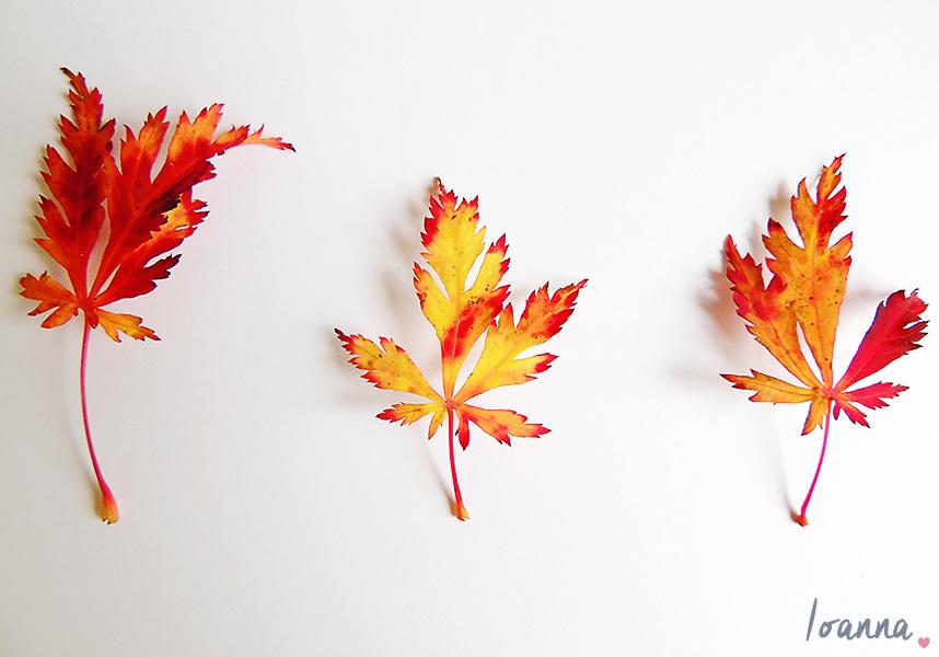 leaves#1.1