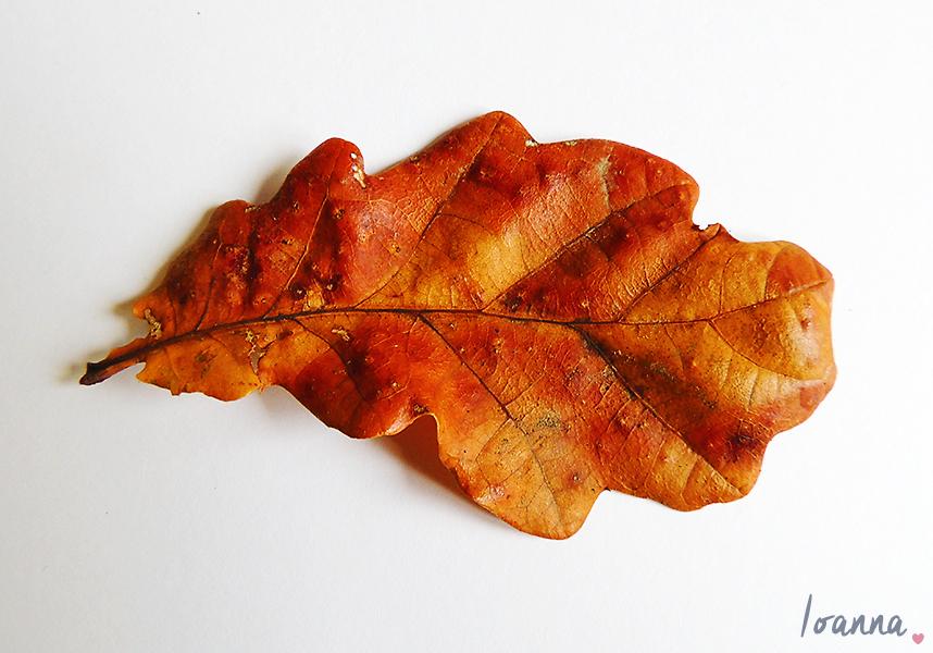 leaves#1.2
