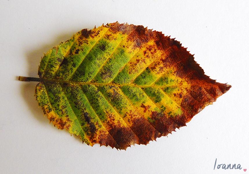 leaves#1.3