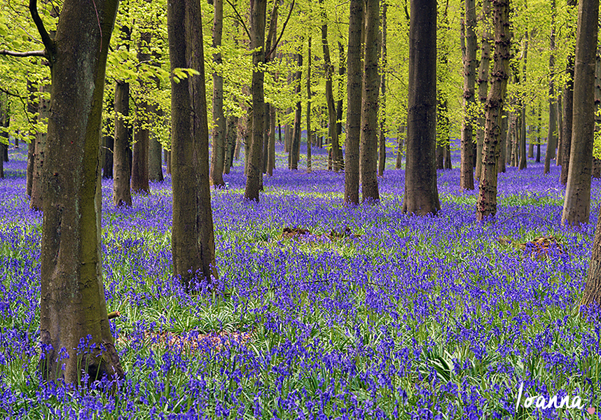 Photo Diary: Dockey Wood