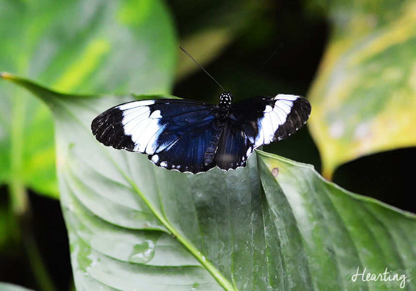 Photo Diary: Tropical Wings Zoo