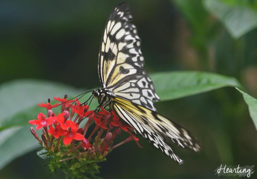 Photo Diary: Tropical Wings Zoo
