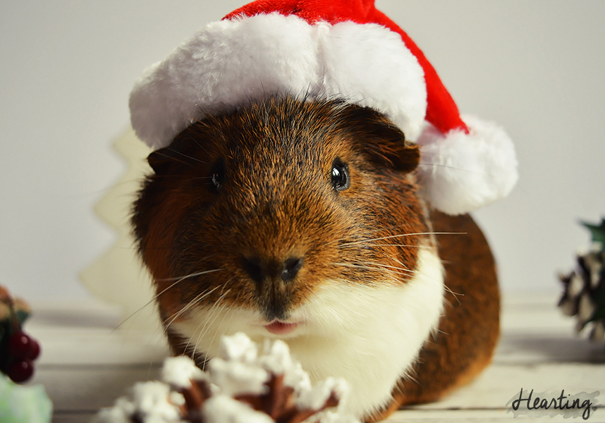 Photo Diary: Santa's Little Helpers featuring Rusty