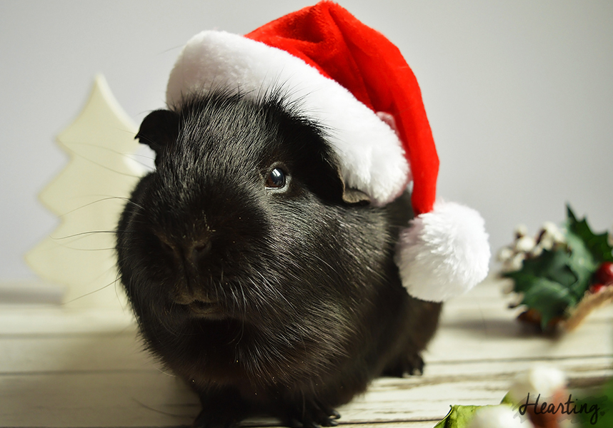 Photo Diary: Santa's Little Helpers featuring Sooty