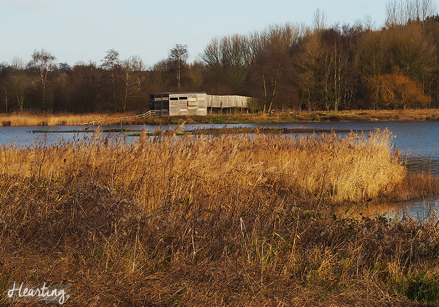 Photo Diary: Amwell Nature Reserve