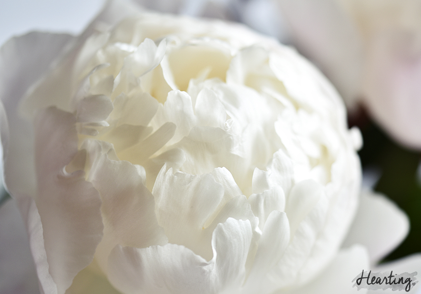 Practice Makes Perfect #15 | Peonies