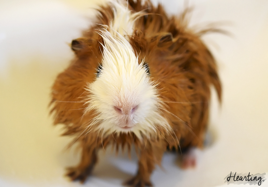 Photo Diary: Piggy Bath Time