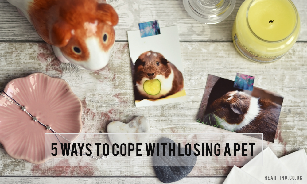 5 ways to cope with losing a pet