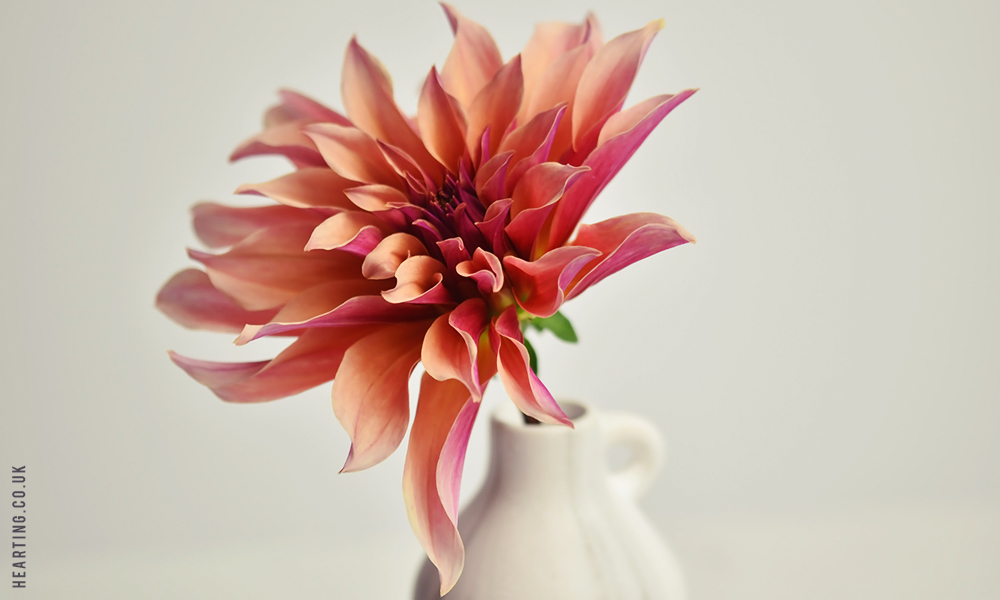 Practice Makes Perfect #16 | Dahlias and Moments of Happiness