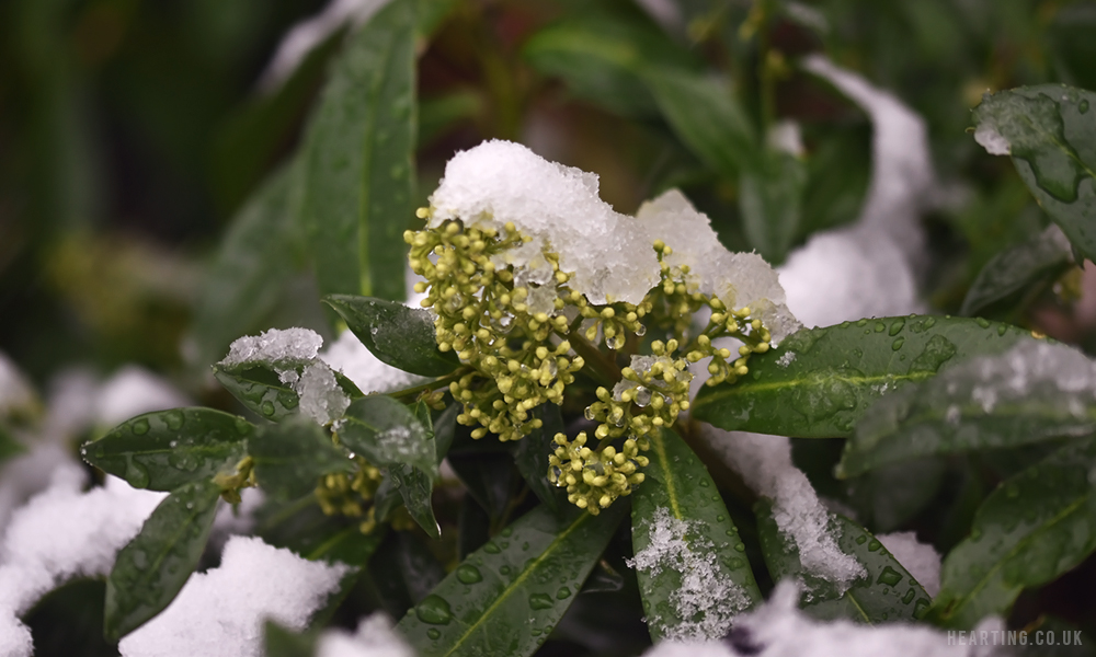 Photo Diary: Snow Is Falling | Snowing In December