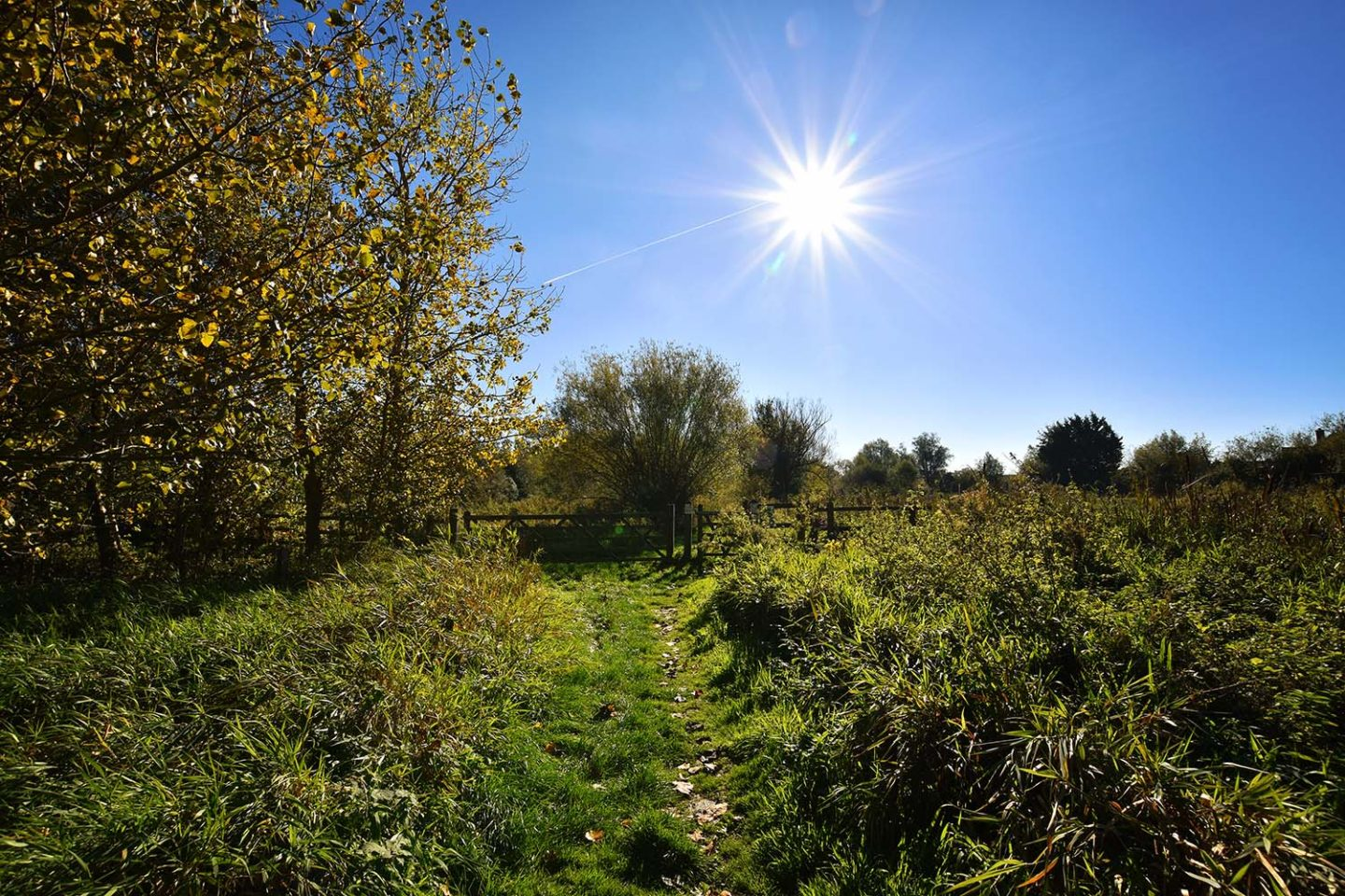 Photo Diary | Revisiting Stotfold Nature Reserve